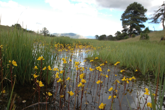 ¡Descubre las plantas carnívoras de las lagunas de Ruidera!