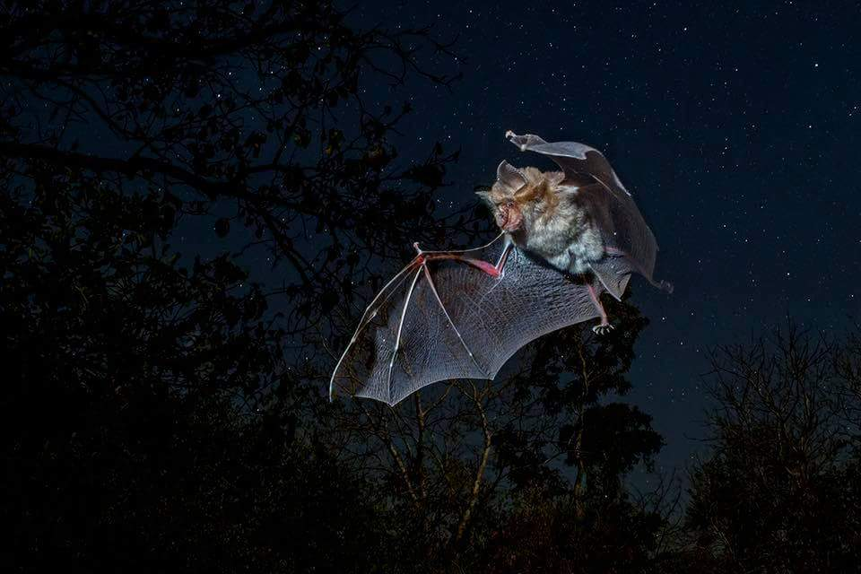 Murciélago: el gran depredador de las Lagunas de Ruidera